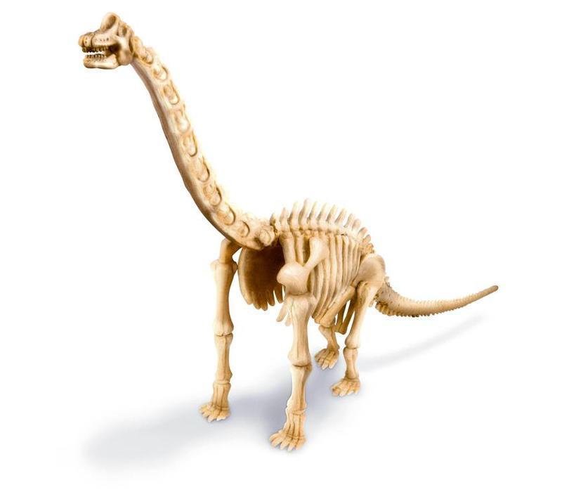 4M KidzLabs Dig Your Dinosaur On Brachiosaur
