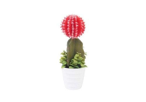 Klevering &Klevering Cactus Red San José