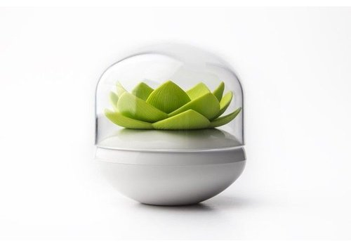 Qualy Qualy Cotton Bud Holder White/Green