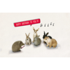 Leuke Kaartjes Leuke Kaartjes Greeting Card Hedgehog Rabbits Happy Birthday To You!!!