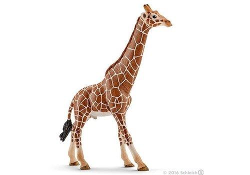 Schleich Schleich Giraf Stier