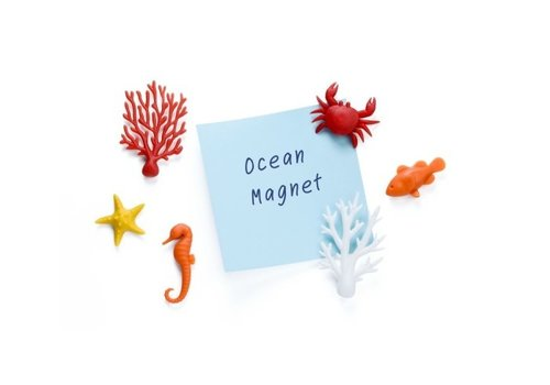 Qualy Qualy Ocean Ecology Magnets set of 6