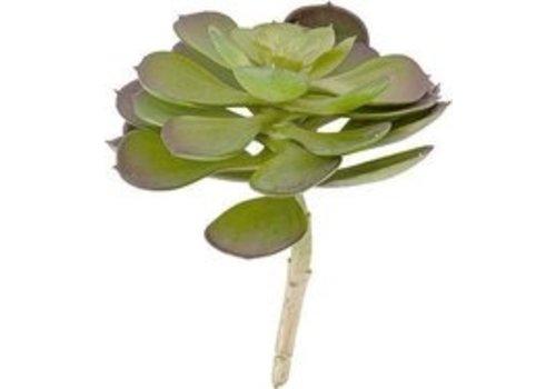 Present Time Present Time Artificial plant Hen Succulent Pick