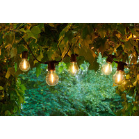Sirius Tobias Starter Kit 10 Clear Bulbs
