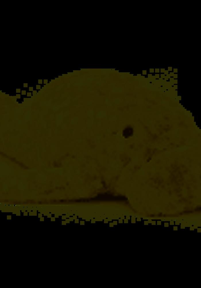 Jelly Cat - Billow Manatee
