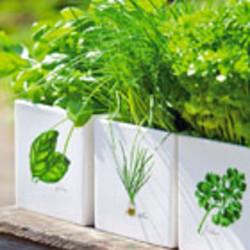 Alle kruidenplanten