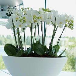Kunstplanten bloeiend