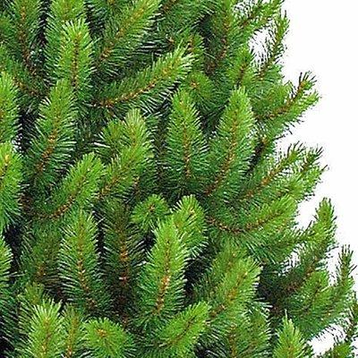 Richmond Pine - Groen - Triumph Tree kunstkerstboom