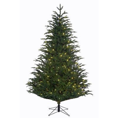 Frasier Fir LED - Groen - BlackBox kunstkerstboom