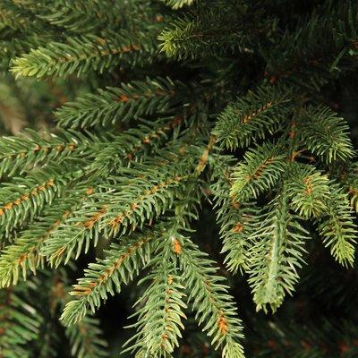 Harrison - Grün - Triumph Tree künstlicher Weihnachtsbaum