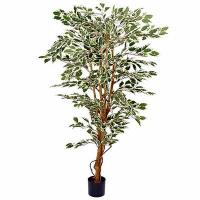 Künstliche Pflanze Ficus Hawaii Grün-bunt - H 180cm - Plastiktopf - Mica Decorations