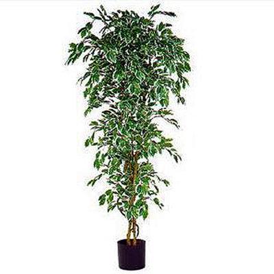 Kunstplant Ficus Hawaii Groen-bont - H 210cm - Kunststof pot - Mica Decorations
