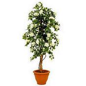 Kunstplant Bougainvillea Groen-Wit - H 150cm - Terracotta sierpot - Mica Decorations