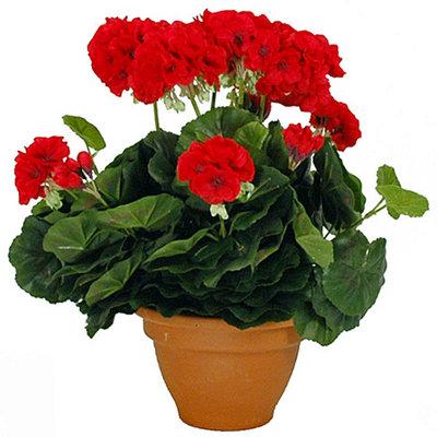 Kunstplant Geranium Rood - H 38cm - Keramiek sierpot - Mica Decorations