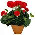Künstliche Pflanze Geranie Rot - H 38 cm - Keramiktopf - Mica Decorations