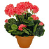Künstliche Pflanze Geranie Lachs - H 38cm - Keramiktopf - Mica Decorations