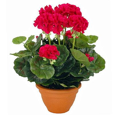 Kunstplant Geranium Donkerroze - H 38cm - Keramiek sierpot - Mica Decorations