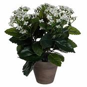 Künstliche Pflanze Kalanchoe Weiß - H 31cm - Keramiktopf - Mica Decorations