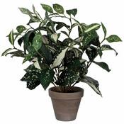 Kunstplant Cordyline Groen-bont - H 35cm - Keramiek sierpot - Mica Decorations