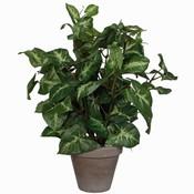 Kunstplant Syngonium (Fittonia) Groen - H 35cm - Keramiek sierpot - Mica Decorations