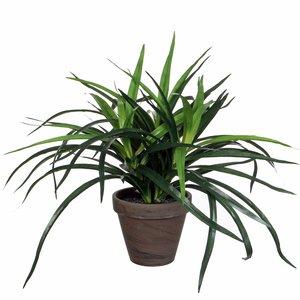 Künstliche Pflanze Dracaena Grün - H 34 cm - Keramiktopf - Mica Decorations