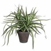 Kunstplant Dracaena Groen-bont - H 34cm - Keramiek sierpot - Mica Decorations