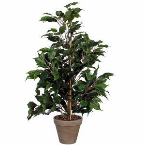 Mica Decorations - Kunstplant Ficus Exotica groen - H 65cm - Keramiek stenen sierpot grijs-antraciet