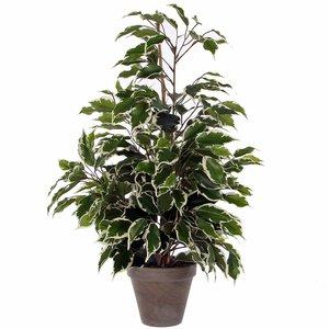 Mica Decorations - Kunstplant Ficus Exotica bont - H 65cm - Keramiek stenen sierpot grijs-antraciet