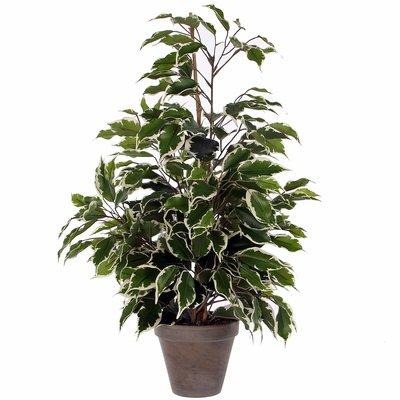 Kunstplant Ficus Exotica Groen-bont - H 65cm - Keramiek sierpot - Mica Decorations
