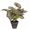 Kunstplant Begonia Groen - H 40cm - Keramiek sierpot - Mica Decorations