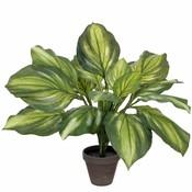 Kunstplant Hosta Groen - H 50cm - Keramiek sierpot - Mica Decorations