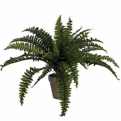 Kunstplant Varen Boston Groen - H 45cm - Keramiek sierpot - Mica Decorations