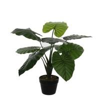 Kunstplant Taro Groen - H 60cm - Kunststof pot - Mica Decorations