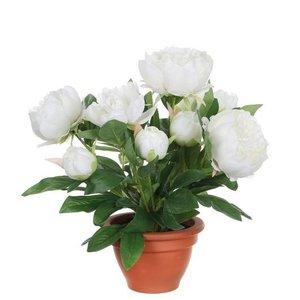 Künstliche Pflanze Pfingstrose Weiß - H 50 cm - Terrakottatopf - Mica Decorations