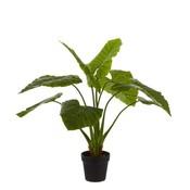Kunstplant Taro Groen - H 100cm - Kunststof pot - Mica Decorations