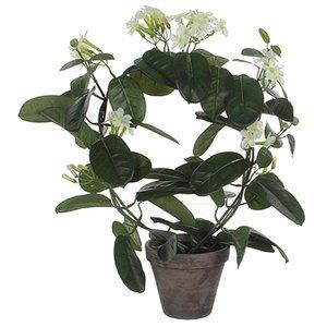 Künstliche Pflanze Brautblume Weiß - H 50 cm - Keramiktopf - Mica Decorations