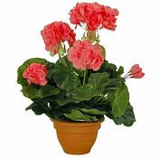 Künstliche Pflanze Geranie Lachs - H 32cm - Keramiktopf - Mica Decorations