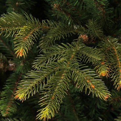 Frasier Fir LED - Grün - BlackBox künstlicher Weihnachtsbaum