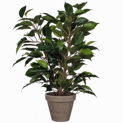 Künstliche Pflanze Ficus Natasja Grün - H 40cm - Keramiktopf - Mica Decorations