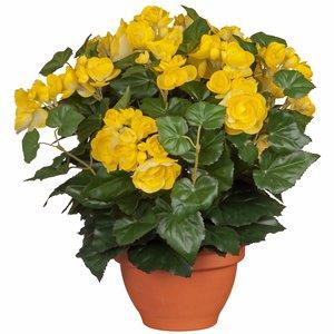 Kunstplant Begonia Geel - H 37cm - Terracotta sierpot - Mica Decorations