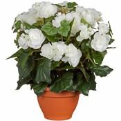 Kunstplant Begonia Wit - H 37cm - Terracotta sierpot - Mica Decorations