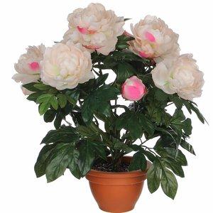 Künstliche Pflanze Pfingstrosen Lachs - H 50cm - Keramiktopf- Mica Decorations
