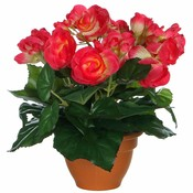 Künstliche Pflanze Begonie Dunkelrosa - H 25cm - Terrakottatopf - Mica Decorations
