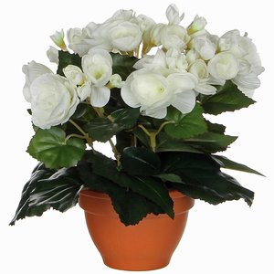 Kunstplant Begonia Wit - H 25cm - Terracotta sierpot - Mica Decorations