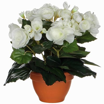 Kunstplant Begonia Wit - H 25cm - Terracotta sierpot - Mica Decorations