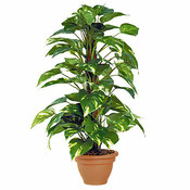 Kunstplant Scindapsus Groen - H 65cm - Campana sierpot - Mica Decorations