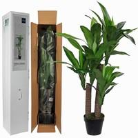 Künstliche Pflanze Dracaena Grün - H 110cm - Kunststofftopf - Mica Decorations