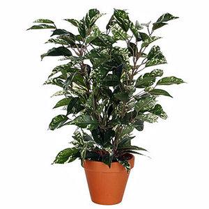 Künstliche Pflanze Ficus Natasja Grünbunt - H 40cm - Keramiktopf - Mica Decorations