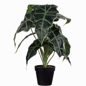 Künstliche Pflanze Alocasia Grün - H 50cm - Kunststoff Ziertopf - Mica Decorations