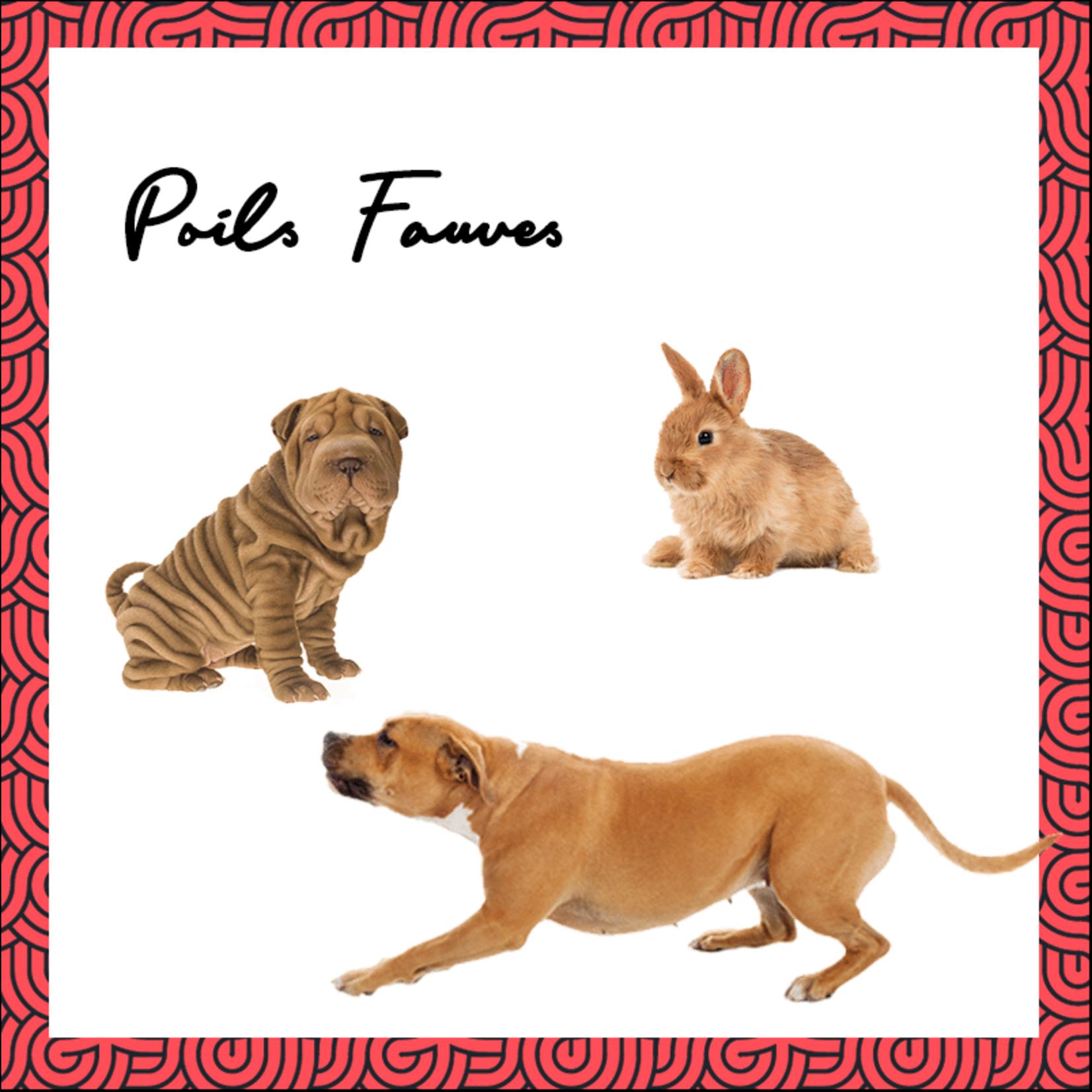Pepet's PEPET'S Vegan Shampooblokje voor huisdieren - (Rood)bruine Vacht